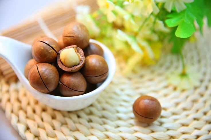 nut protein macadamia nuts